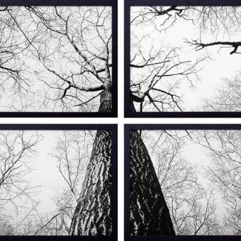 Conjunto de Quadros Decorativos Árvores em Preto e Branco Kit com 4 Quadros 60x40cm